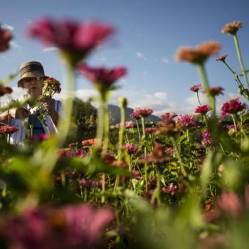 Plants from South Korea, Nepal and Kenya take root in Colorado Springs community garden - Colorado Springs Gazette
