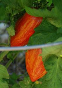 harvesting_seeds_for_next_years_planting_season__kpcnews_-_kpcnews.com_.png