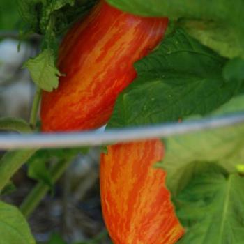Harvesting seeds for next year's planting season | Kpcnews - KPCnews.com