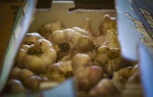 what_makes_garlic_surprisingly_easy_to_grow_-_santa_rosa_press_democrat.png
